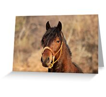 JOHNY CASH - The Stallion Greeting Card