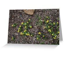Winter Aconite Greeting Card