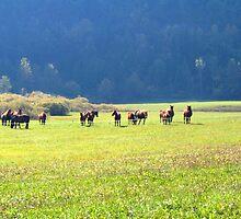 HORSES HORSES HORSES  by SofiaYoushi