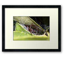 Spider's lair Framed Print