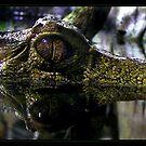 Dinosaur by Devon Mallison