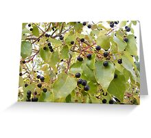 First Fruits Greeting Card