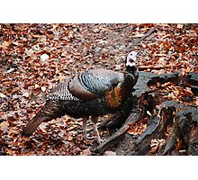 Wild Turkey Checking Out my Lens Photographic Print