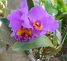Orchid by Nancy Pobiak