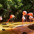 Flamingos by Ashley Berge