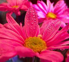 pinky by Nina by Linda Sannuti