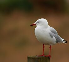 The seagul before.... by theodoorventer