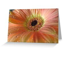 Passionate Peach Greeting Card