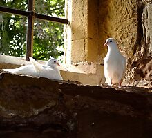 Doves Of Peace by chriscroxall