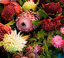 Collection Of Waratahs by MiImages