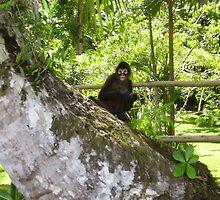 monkey in the tree  by johnjm33