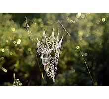 Morning Web Photographic Print