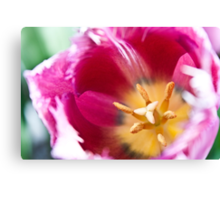 Anatomy of a Tulip: Pink and White Canvas Print
