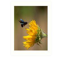 Black Flower Wasp Art Print