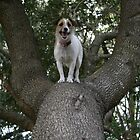 Missy the tree climber by Adria Bryant