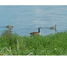 Momma Geese Photographic Print