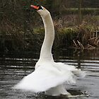 Rising Swan by jcjimages