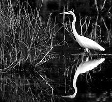 Snowy Egret by Scott Hansen