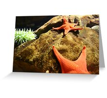 orange starfish Greeting Card