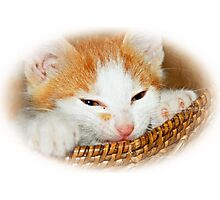 Kitten in Basket Photographic Print