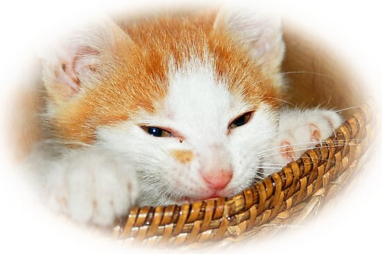 Kitten in Basket by Crystal Wightman