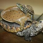 Turtle Trio by Sandra Brock