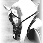 The Warm Up B&W by FirstHorse
