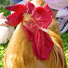 Bartleby, King of the Roosters by APhillips