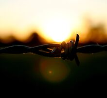 barbed by jfpictures