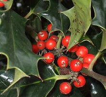 holly berries by amandaroyal71