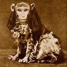 Monkey Business 2. by - nawroski -