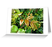 Glorious Greens - Sunlit Shrubbery in Mirrored Frame Greeting Card