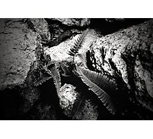 live strong Photographic Print