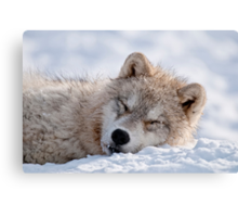 I lay my head down to sleep Canvas Print