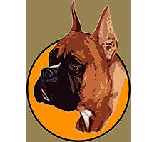 BOXER DOG PORTRAIT  Photographic Print