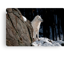 Look Out Canvas Print