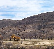 Fall in New Mexico by Alaindrea