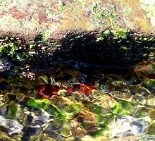 Rockpool by reflector