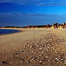 Pebbled Beach by Larry149