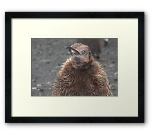 "King Penguin Chick ~ ""Attitude"" Framed Print"