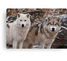 Double Trouble Canvas Print