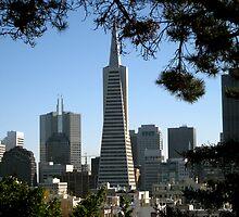 San Fransisco by Matthew Wrobel