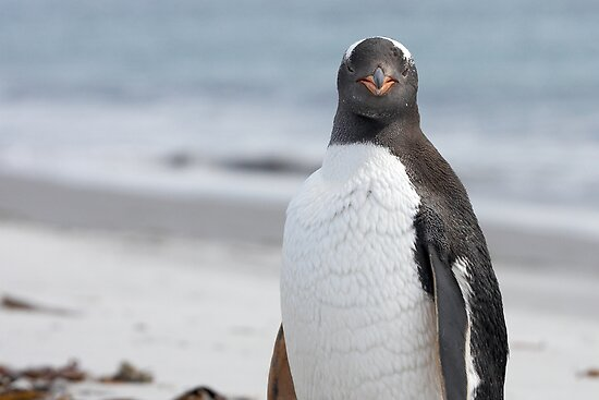 "Gentoo Penguin ~ ""The Gentleman"" by Robert Elliott"