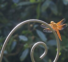 Happy Dragon Fly - Orange Dragon Fly by leih2008