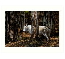 Arctic Wolf in Forest Art Print