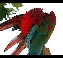 parrot 01 by Kittin