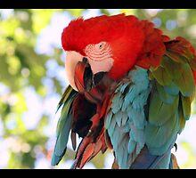 parrot 02 by Kittin