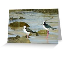 Powered Spring Stilts! - Pied Stilt - Kaka Point - NZ Greeting Card