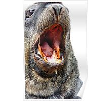 Slobber Chops - New Zealand Sea Lion  Poster