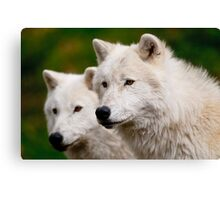 Arctic Wolf Pair Canvas Print